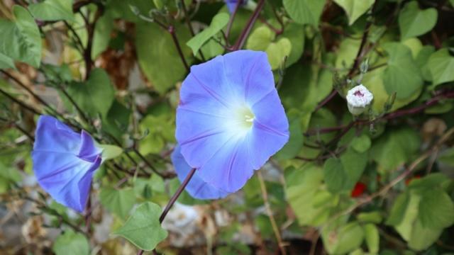 Le jardin des couleurs 010_8026