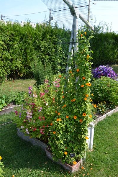 Un petit tour d'horizon de notre jardin...... 011_8016