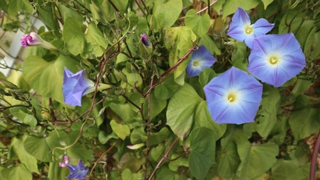 Le jardin des couleurs 011_8027