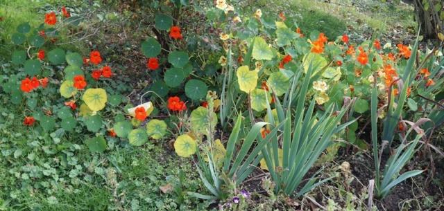 Le jardin des couleurs 013_8027
