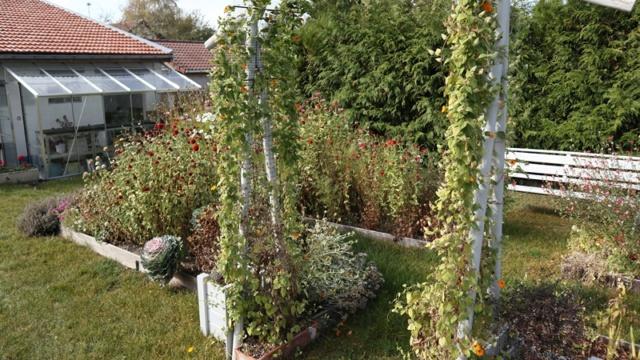 Le jardin des couleurs 019_8019