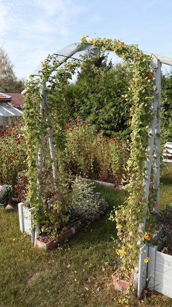 Le jardin des couleurs 020_8017