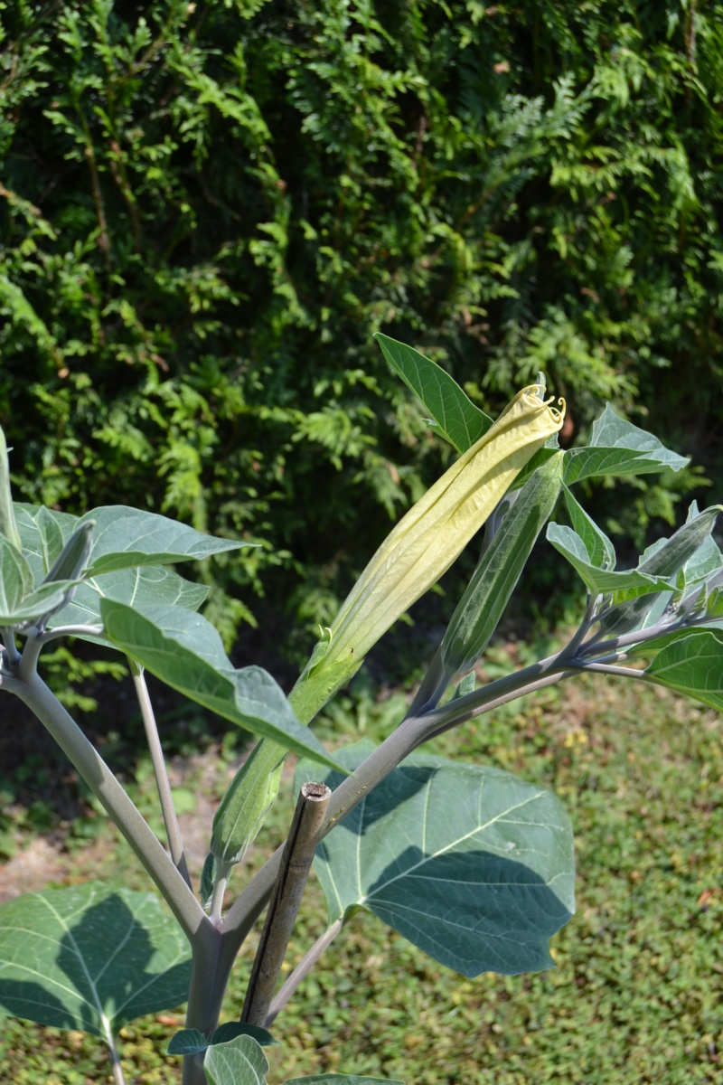 Les plantes toxiques. 02310