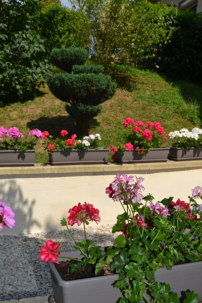 Un petit tour d'horizon de notre jardin...... 026_8012