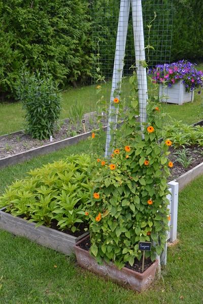 Un petit tour d'horizon de notre jardin...... 103_8010