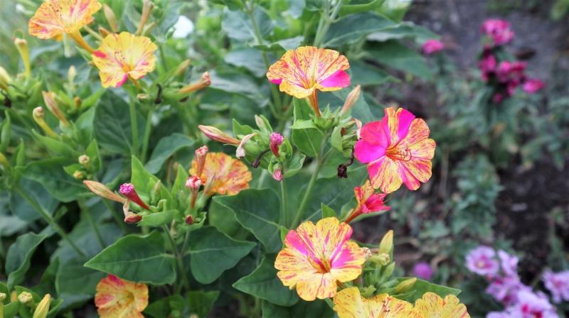 Promenade au jardin ce matin..... Img_0067