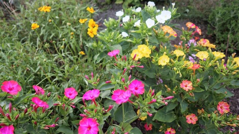 Promenade au jardin ce matin..... Img_0068