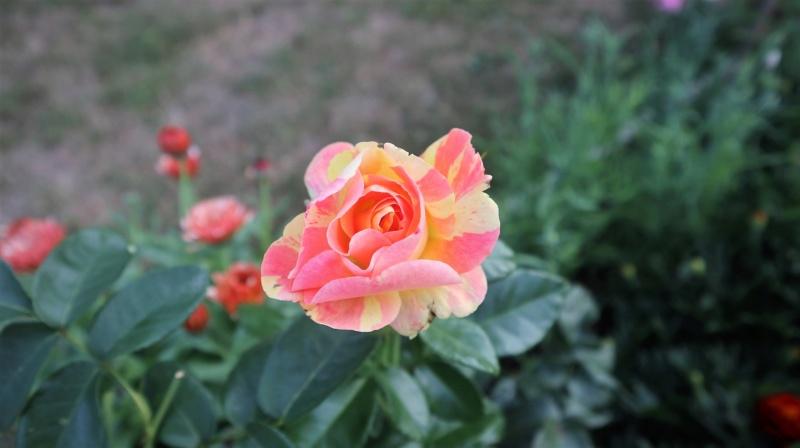 Promenade au jardin ce matin..... Img_0071