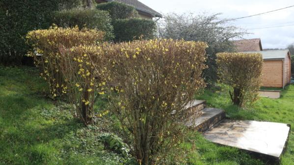 Fevrier - Mars 2020....Retour au jardin. Img_1681