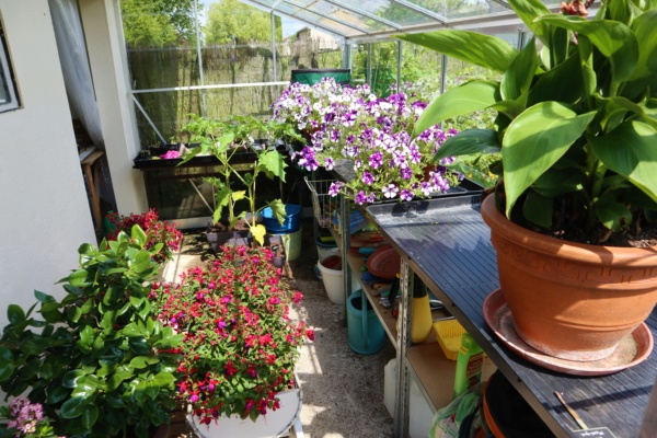 Une serre au jardin... Img_2331