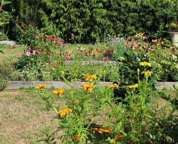 Promenade au jardin ce matin..... Img_2439