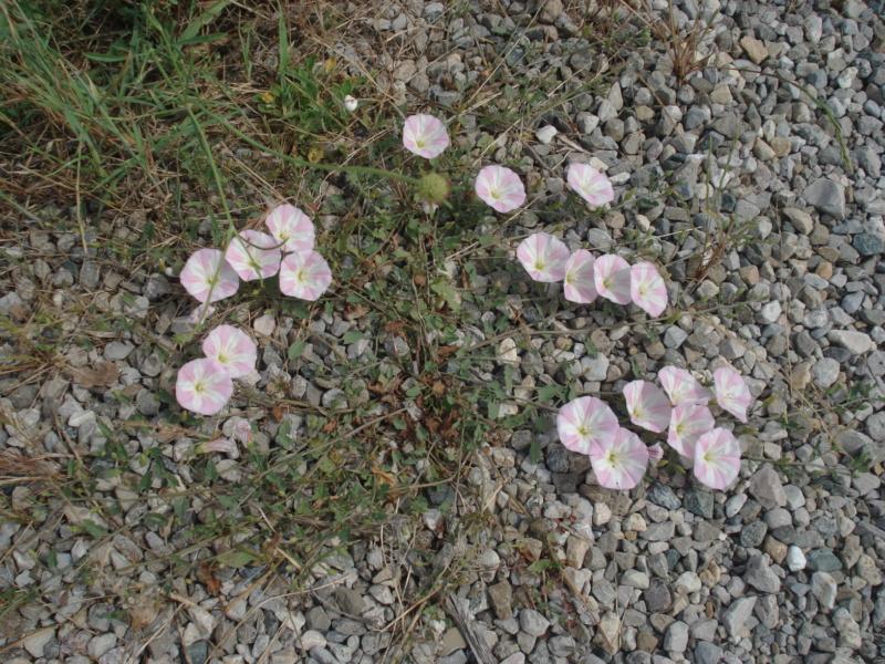 Fleurs de saison - Page 15 Dsc04610