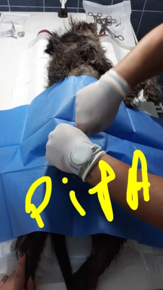 Fourrière de PIATRA NEAMT -  situation Juin 2019 -  - Page 3 68880011
