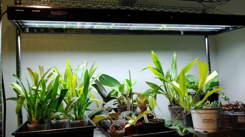 Orchidées + succulentes + autres. Chez Ola, saison 2.  20191116