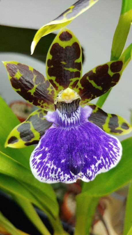 Orchidées + succulentes + autres. Chez Ola, saison 2.  - Page 3 20200116