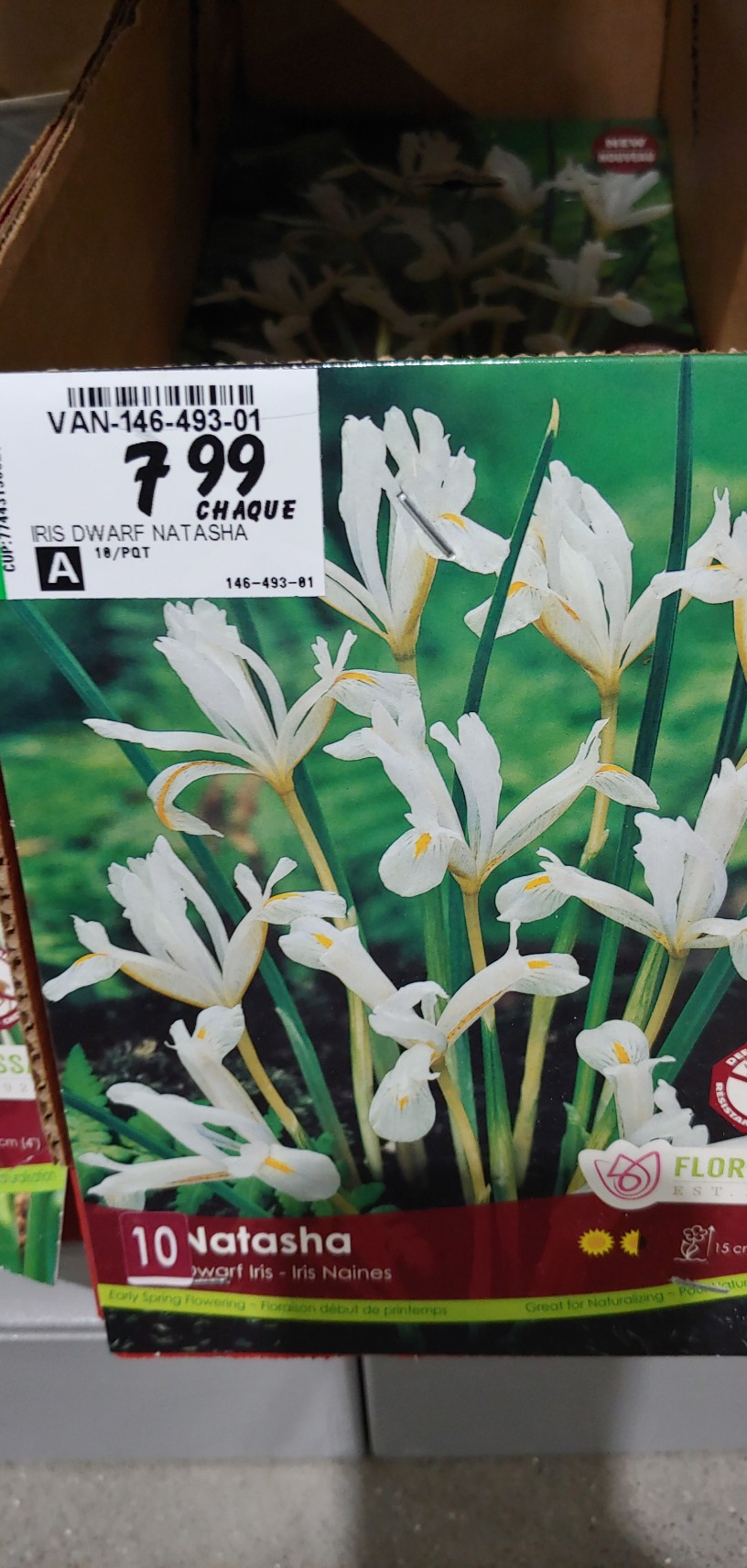 Iris reticulata - Page 6 20200917