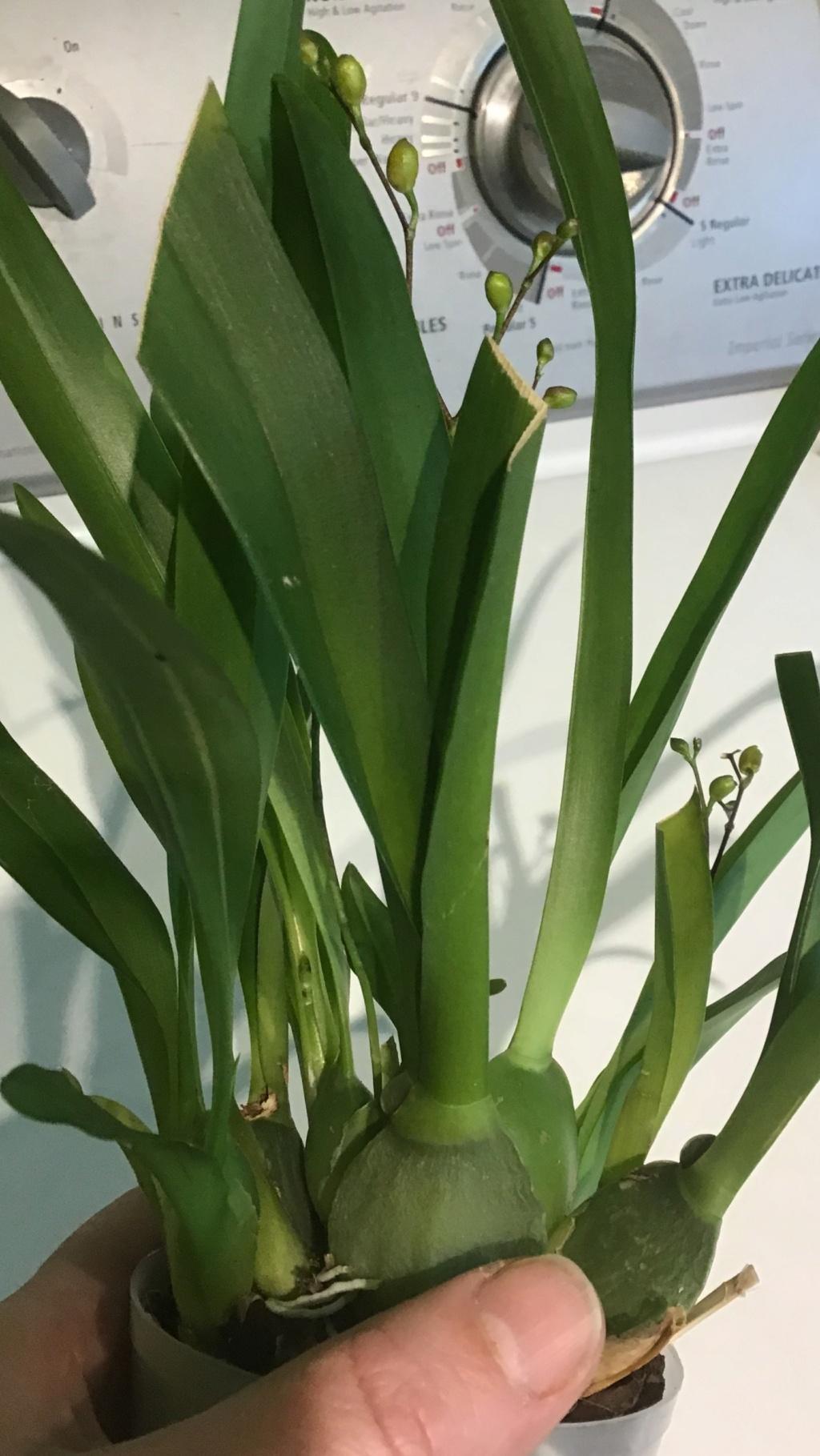 Orchidées + succulentes + autres. Chez Ola, saison 2.  - Page 2 C5037710