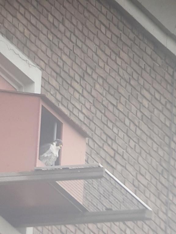 Leiden / Uniper Benelux N.V. - Pagina 4 20210310