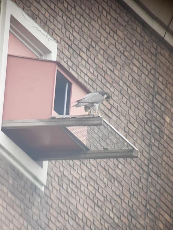 Leiden / Uniper Benelux N.V. - Pagina 4 Ze_zij10
