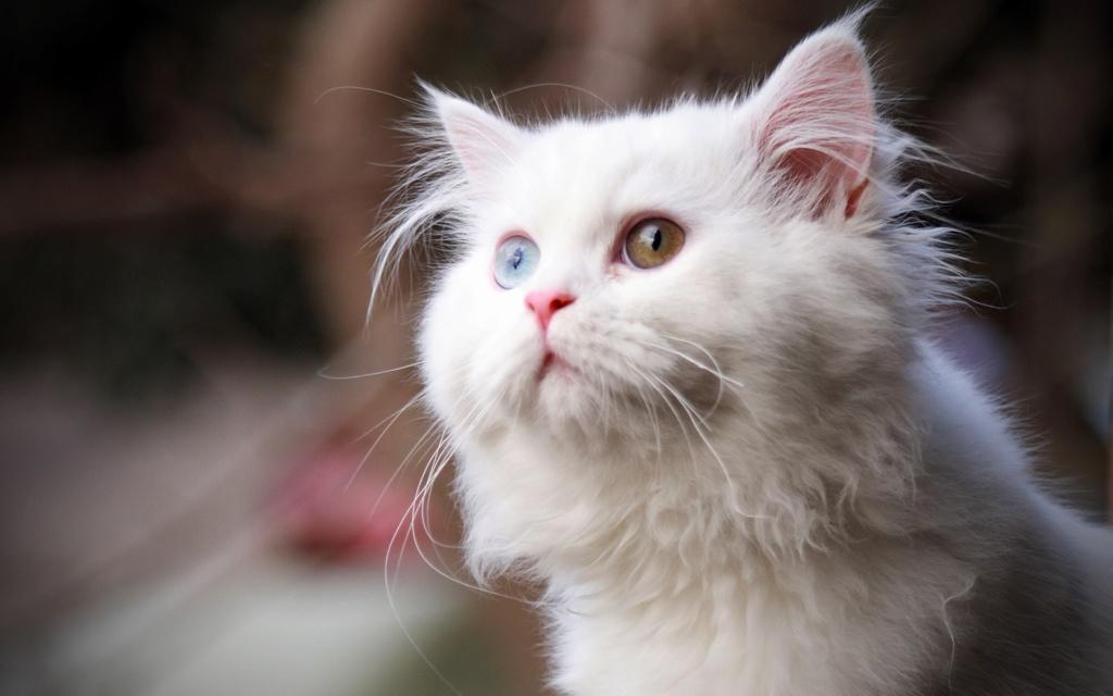 даёшь котиков !!! Animal10