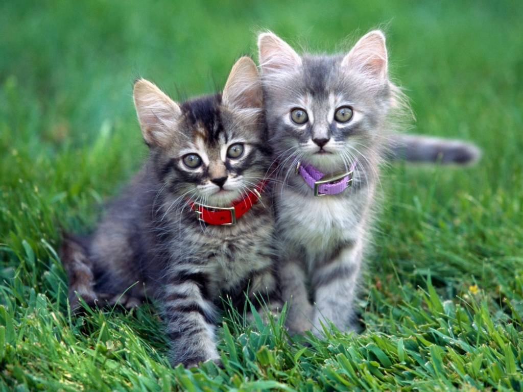 даёшь котиков !!! B9508310