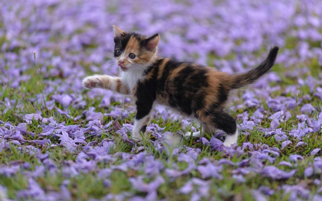 даёшь котиков !!! Cats_k10