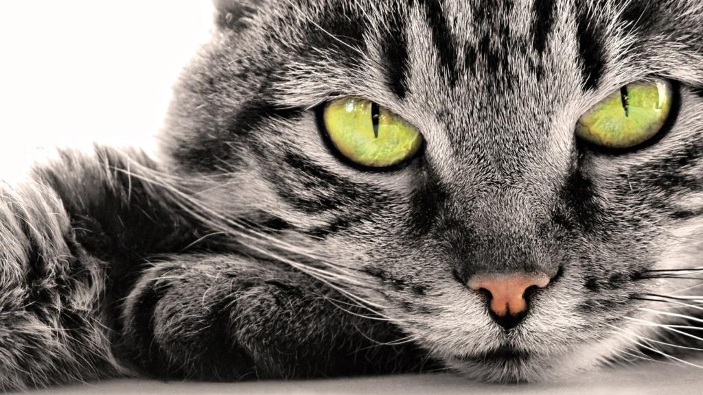 даёшь котиков !!! Kot-ko10