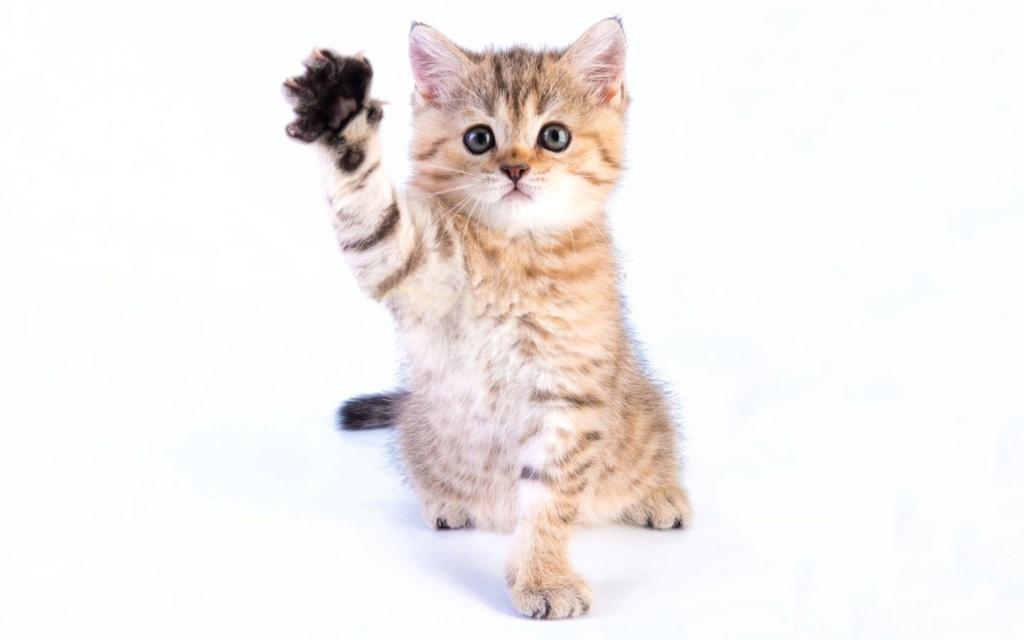даёшь котиков !!! Koteno11