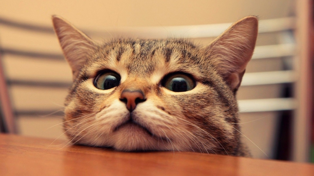 даёшь котиков !!! Nastol10
