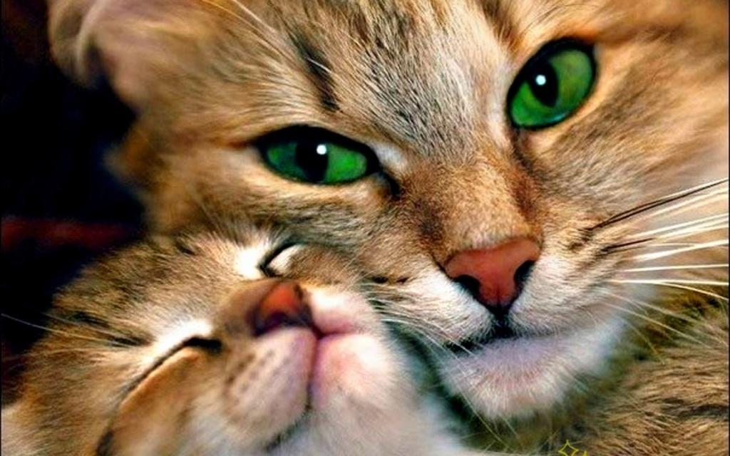 даёшь котиков !!! Nastol11