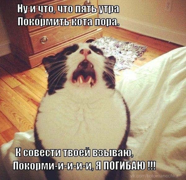 даёшь котиков !!! Qaa53n10