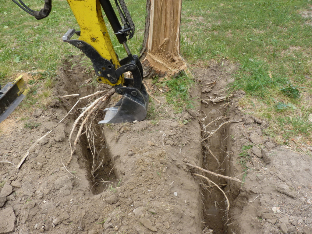 Travaux pratiques: déterrage d'un acacia Wood_110