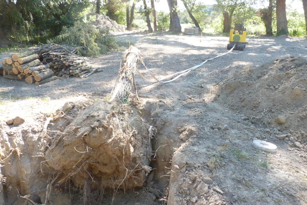 Travaux pratiques: déterrage d'un acacia Wood_111