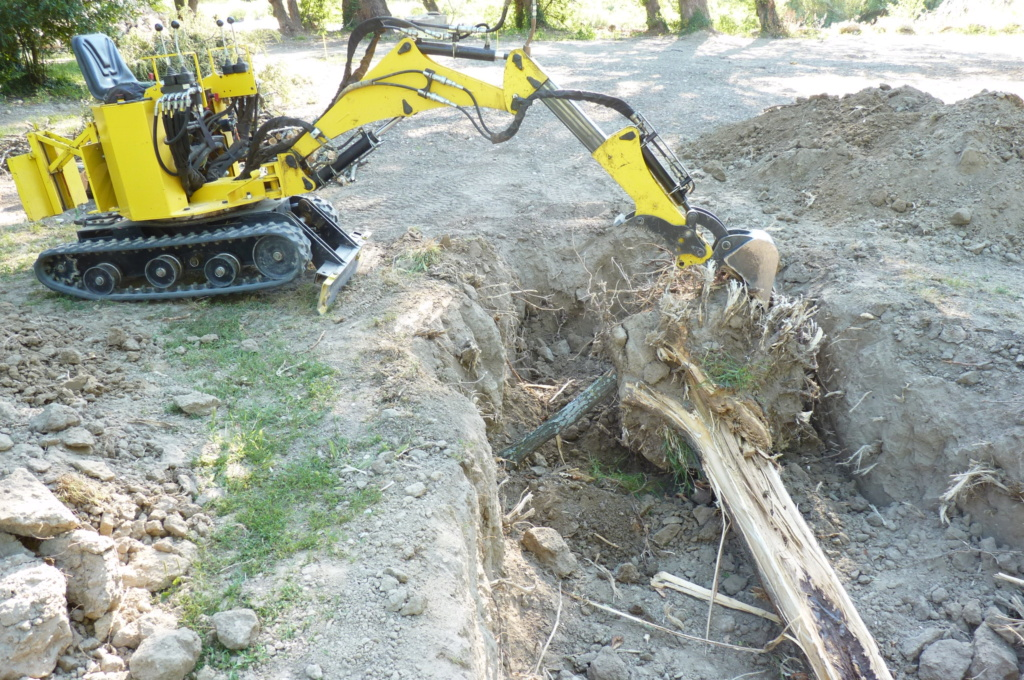 Travaux pratiques: déterrage d'un acacia Wood_113