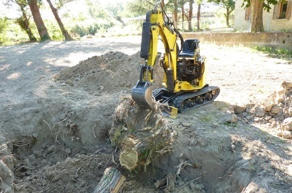 Travaux pratiques: déterrage d'un acacia Wood_114