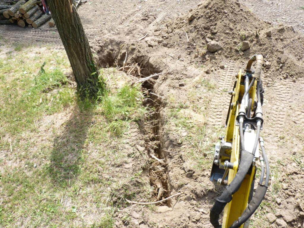 Travaux pratiques: déterrage d'un acacia Wood_410