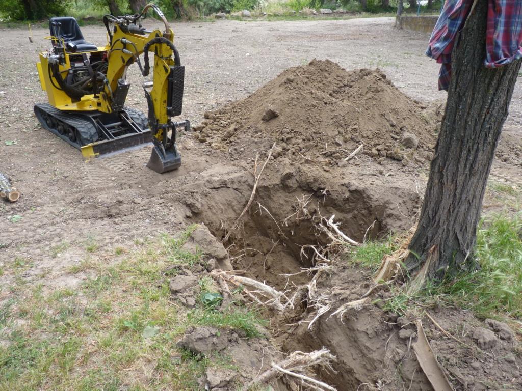 Travaux pratiques: déterrage d'un acacia Wood_710