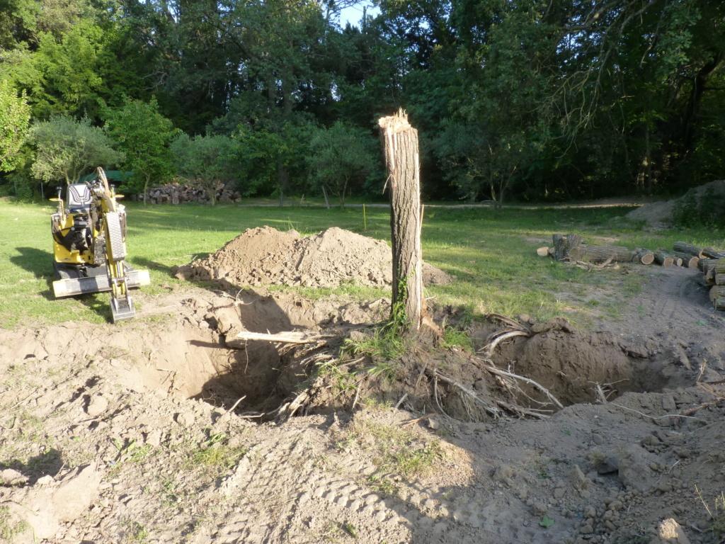 Travaux pratiques: déterrage d'un acacia Wood_810