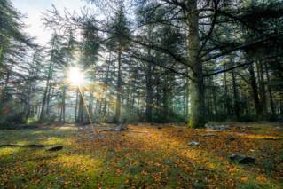 L'étrange forêt - Chapitre I.1 Sans-t10