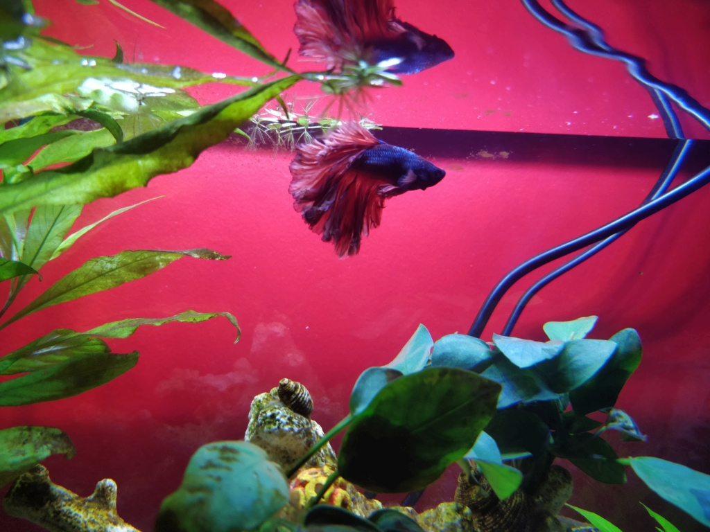 Aquarium 37l Betta Img_2015