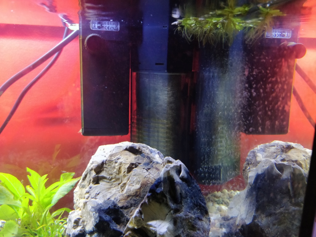 Aquarium 37l Betta Img_2016