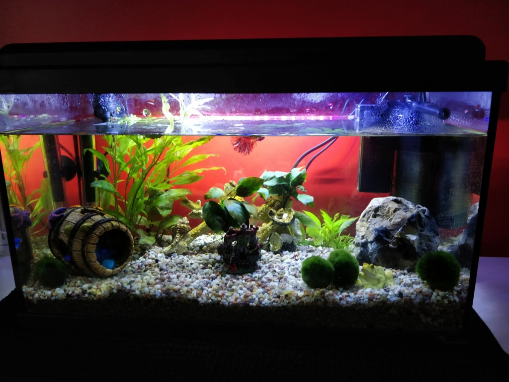 Aquarium 37l Betta Img_2017