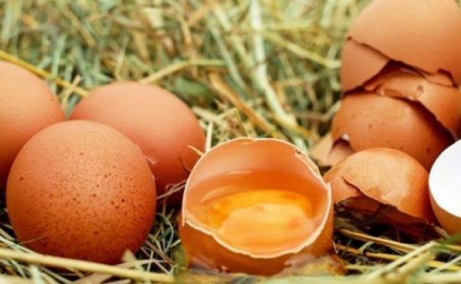 Gjashtë fakte për vezët 20190413