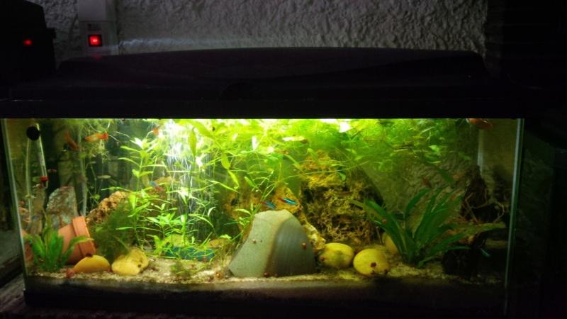 Les aquariums de mes protégés Img_2025