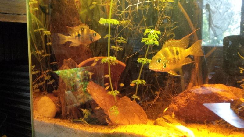 Les aquariums de mes protégés Img_2027