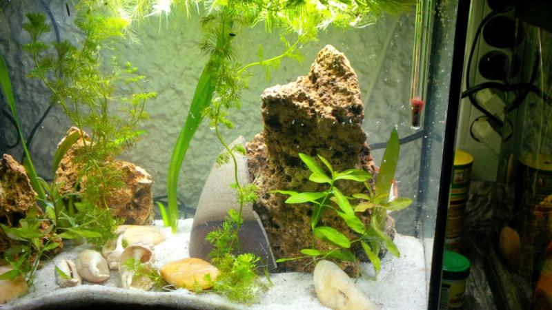 Les aquariums de mes protégés Img_2028