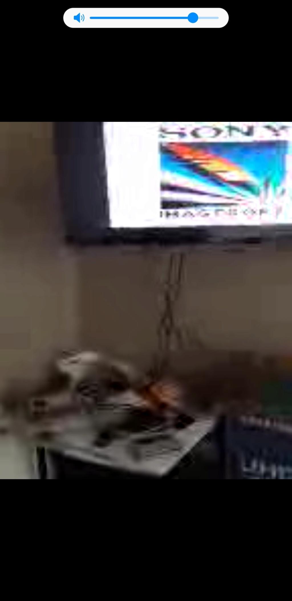 Snes pack street fighter turbo écran noir  Screen11