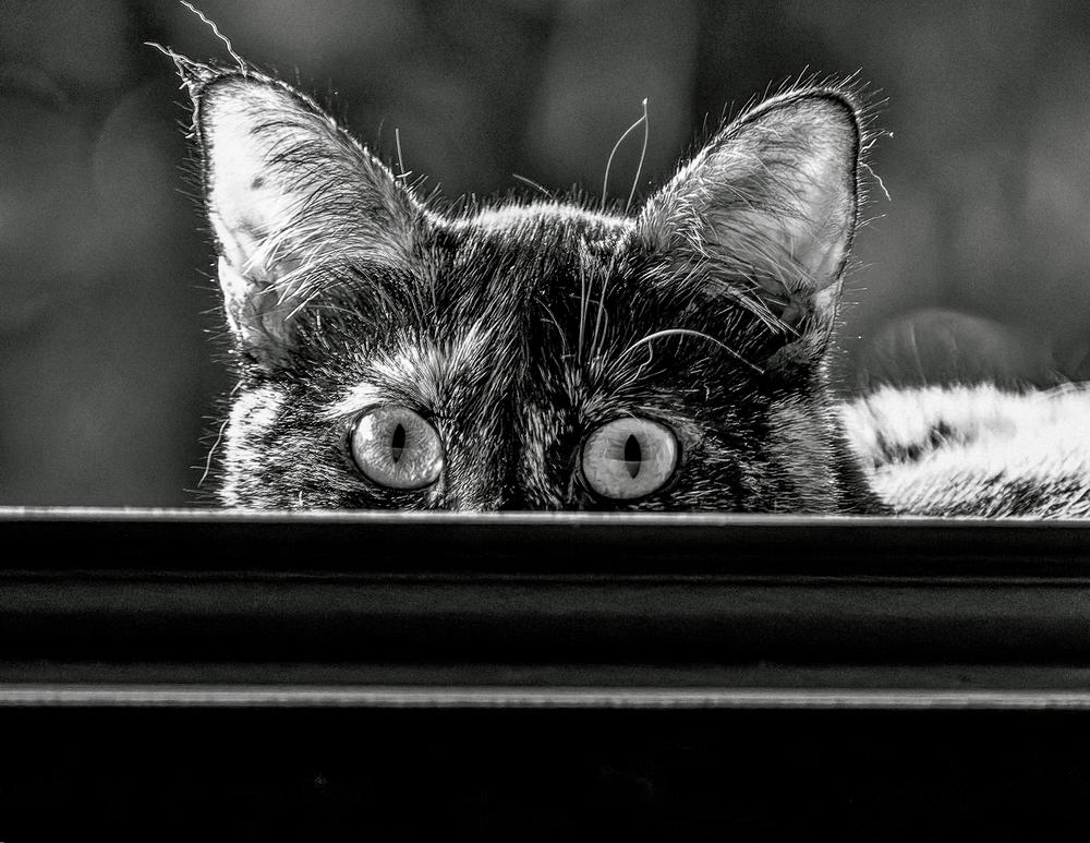 Je te surveille, gaffe à toi Jetesu10