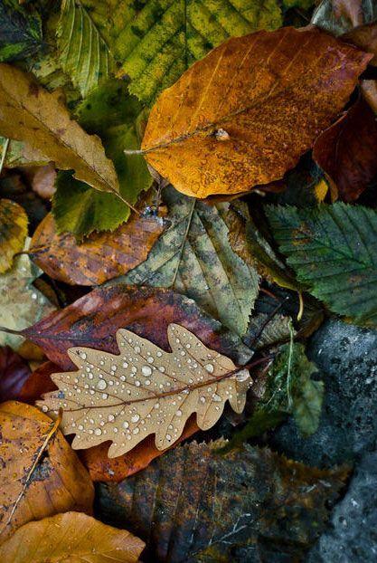 Images d'automne  - Page 3 0012