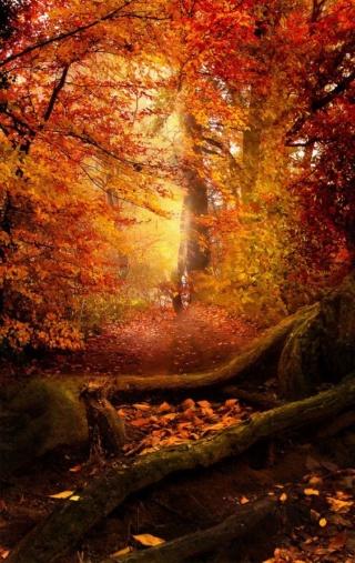 Images d'automne  - Page 3 0013